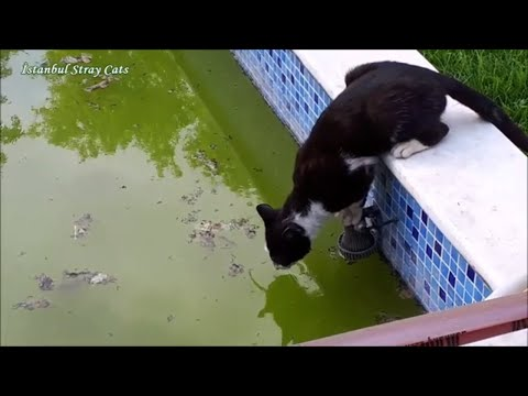 Stray cats to drink water from swimming pool