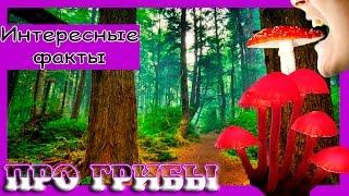 Интересные факты про грибы.