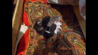 Маркиза привела котят.