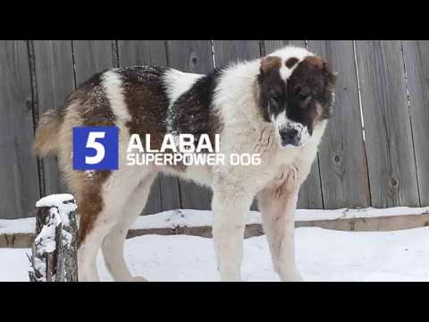 Top 5 Dog Breeds With Ultimate Power From Another Planet