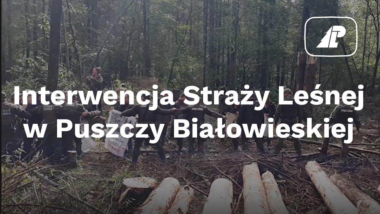 Interwencja Straży Leśnej w Puszczy Białowieskiej