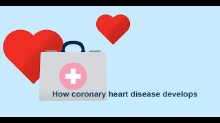 How coronary heart disease (atherosclerosis) develops