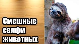 Смешные селфи от харизматичных домашних питомцев (Интересные факты о животных)
