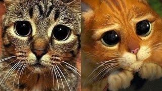 Коты, похожие на героев кино и мультфильмов