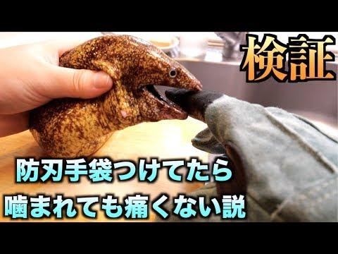 【検証】防刃手袋つけてたらウツボに噛まれても痛くない説