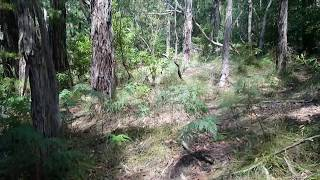 Save Arthurs Seat Bushland Video Clips