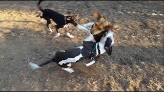 Buddy Mercury - Best Of The Dog Park