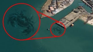 most-mysterious-creatures-spotted-on-google-earth