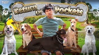 DOG SHORT FILM | RETURN OF POCKETS | BEAGLE - DOBERMAN - LABRADOR | #Funny #Bloopers || MOHAK MEET