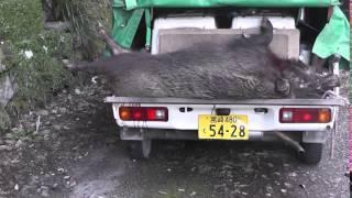 120Kオス猪! (株)マツダコーポレーション http://m-rager.com.