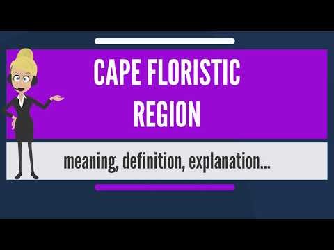 What is CAPE FLORISTIC REGION? What does CAPE FLORISTIC REGION mean? CAPE FLORISTIC REGION meaning