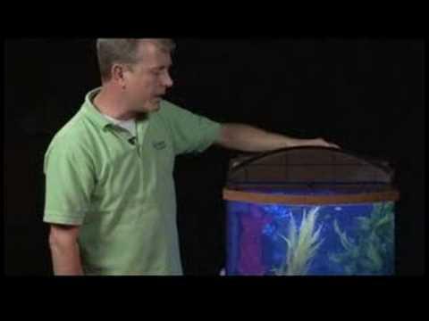 how to aquarium fish care