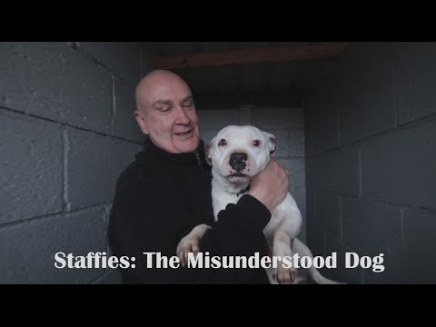 Staffies: The Misunderstood Dog - Documentary