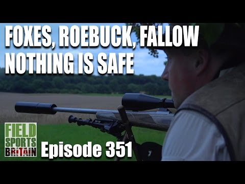 Fieldsports Britain - Foxes, Roebuck, Fallow, nothing is safe