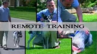 Part 1: Innotek Remote Collar Training For Dogs - Www.innotek.net