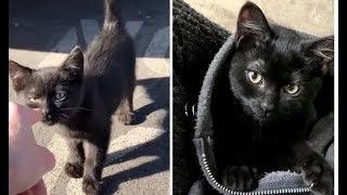 Мужчина вышел на обеденный перерыв и вернулся с котёнком на плече
