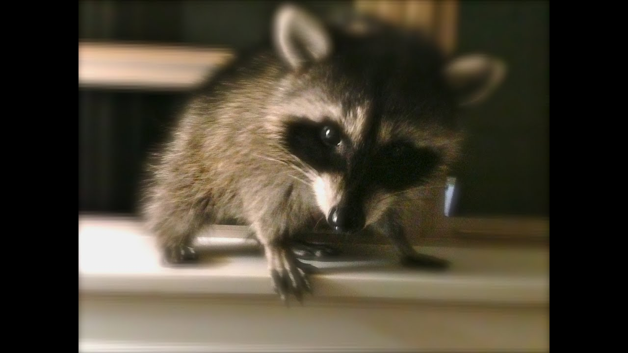 raccoon single muslim girls Hijab is not a piece of cloth on your head  or dark eyeliner such that people confuse between you and a raccoon  a single 'look' can say more than.