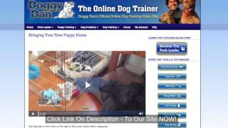 Dog Commands - Teach Your Dog Sit, Down, Up and Stand in MINTUES!