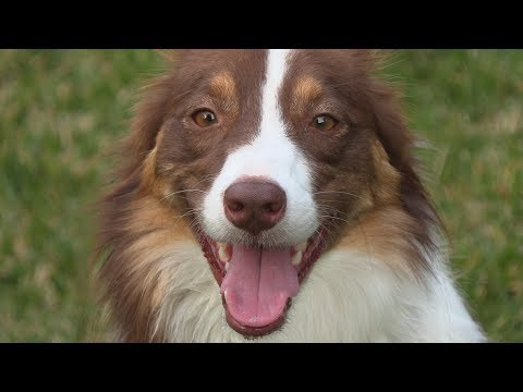 4K Canon XF400 60fps test with my dog Layla