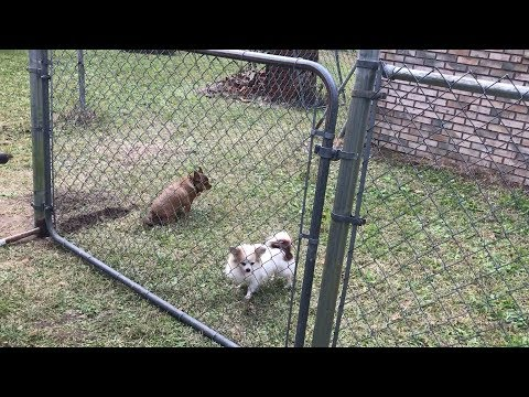 How To Build A Small Chain Link Fence / Enclosure For Small Dogs