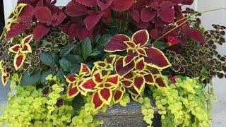 10 Truques E Dicas Simples De Cultivar Plantas