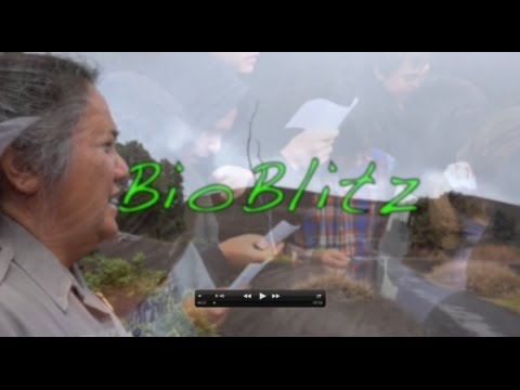 BioBlitz 2015 at Hawai