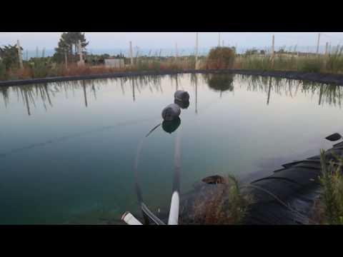 Irrigazione mais 2017 landini nodolini doovi for Irrigazione vigneto