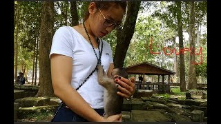 Surprise to see small baby monkey like playing cute girl & so lovely