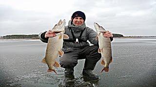 КРУПНАЯ ЩУКА на ЖЕРЛИЦЫ по первому льду Рыбалка в декабре 2019