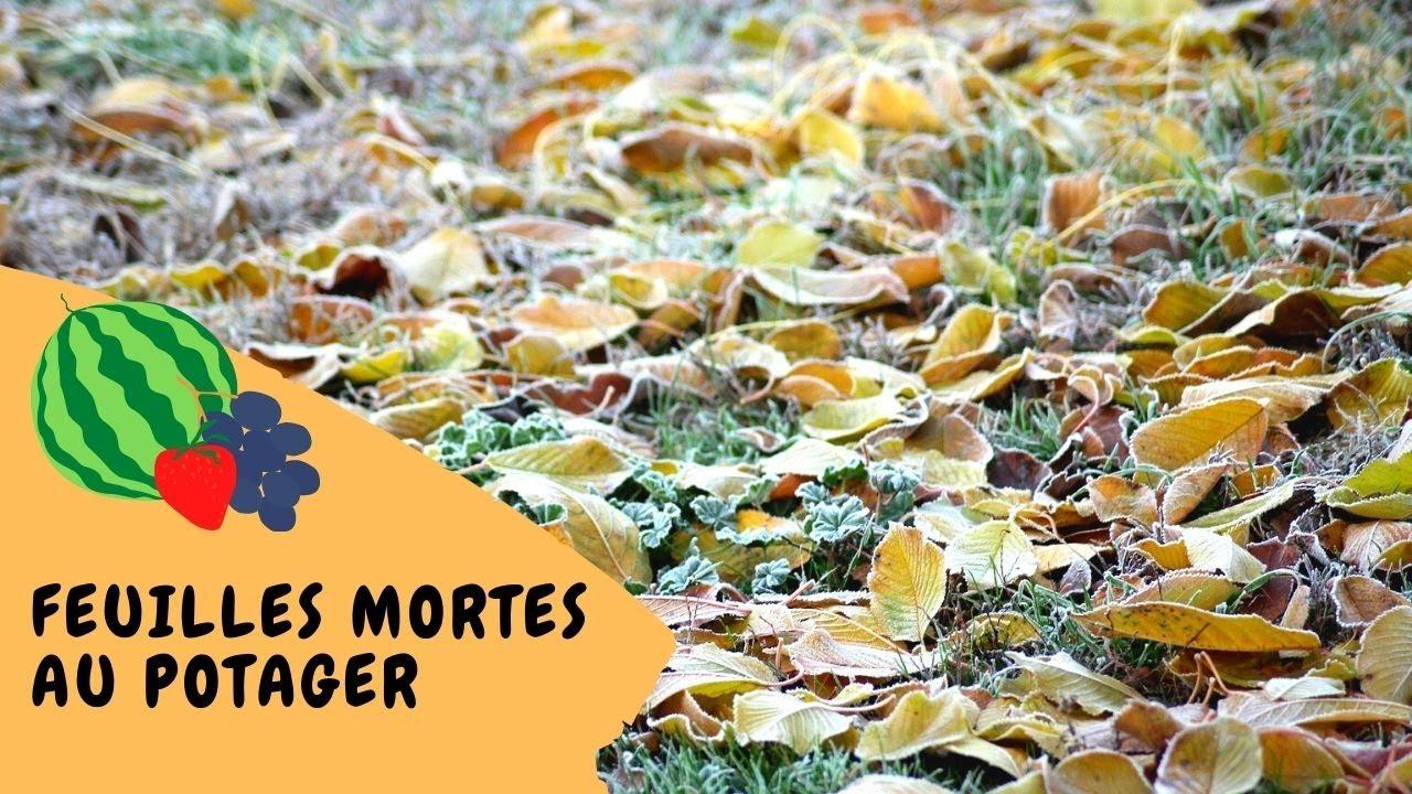 feuilles mortes au potager l or brun du jardinier