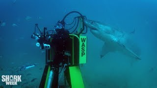 Chris Fallows and Jeff Kurr's Best Moments  | The Faces of Shark Week