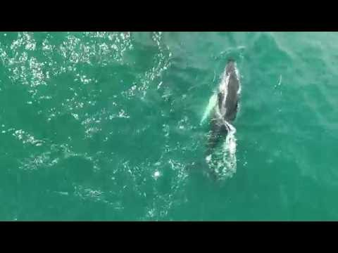 """Humpback whales in Costa Rica - """"Mother's love"""""""