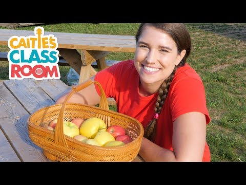 Let's Go To An Apple Orchard | Caitie's Classroom | School Field Trip For Kids