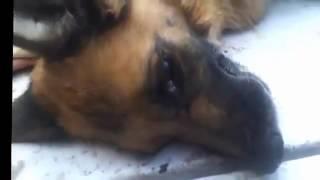 Стоимость гуманного усыпления агрессивных животных в Москве