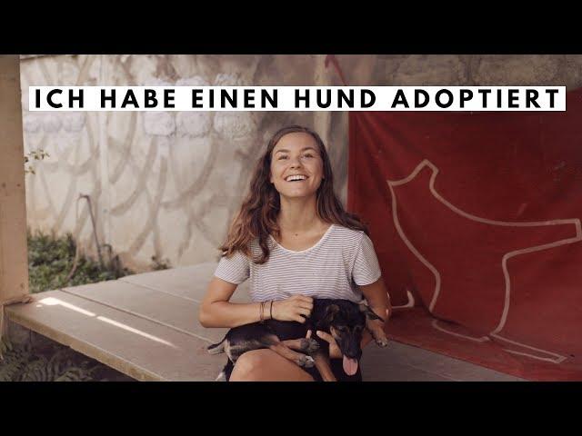 Ich habe einen Hund adoptiert!   Q&A