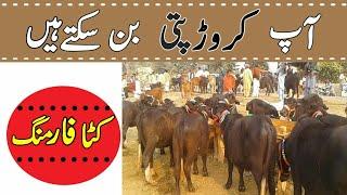 Katta Farming Business Like Poultry Farm Day 1 To110-How To Earn Money From Katta Farming