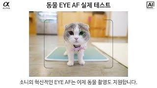 [소니 미러리스] 동물 EYE AF 실제 테스트와 설정…