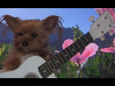 FUNNY EASTER SONG: Cute Singing Puppy Dog!