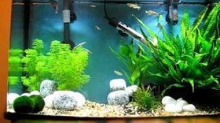 64l tropical aquarium