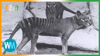 Top 10 Duniya Se Extinct Prani (Extinct Animals)
