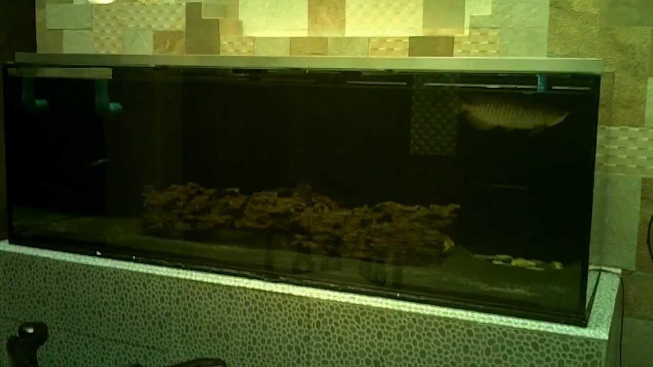 Aquarium fish tank sand - My New 400 Gallon Monster Fish Tank With Driftwood And Black Sand