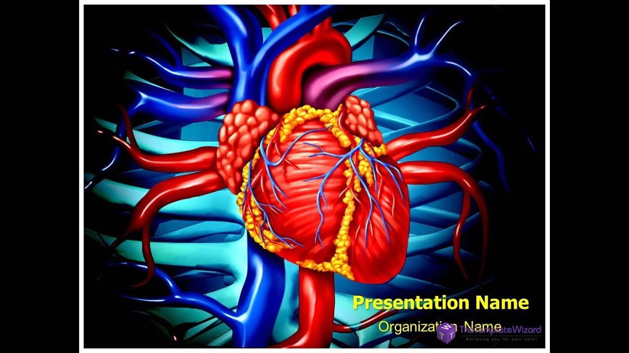 Heart veins anatomy powerpoint template thetemplatewizard heart veins anatomy powerpoint template thetemplatewizard youtube alramifo Choice Image