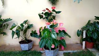 Plantas de Sombra e Dicas de Cultivo