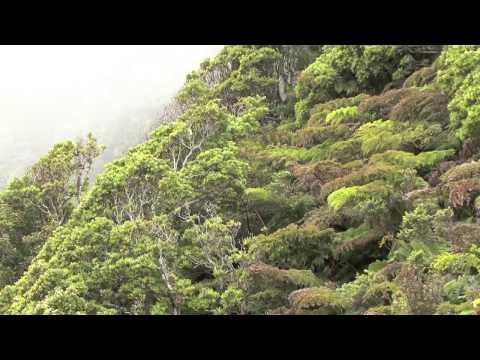 isla (island- archipel) juan fernandez - flora-flore- partie 02