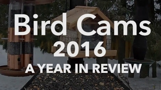 Bird Cams 2016: A Year In Review thumbnail