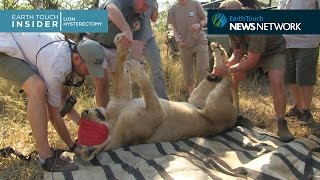 Lion Hysterectomy