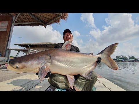 Japanese Client Giant Mekong Catfish Fishing Thailand 2020-BKKGUY