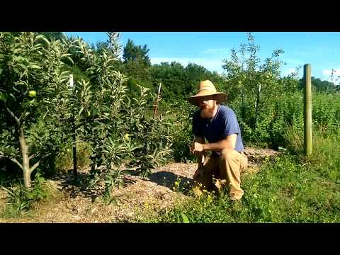 Starting Our Permaculture Orchard