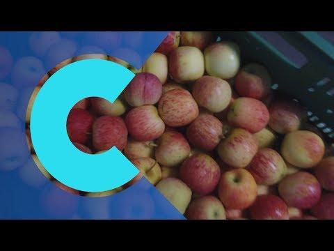 "Saving ""imperfect"" fruit in Brazil"