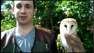 Owls To You - How It All Started!